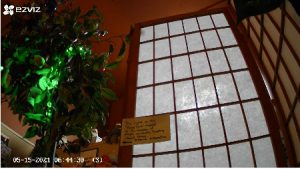 Live video of Peace Tree at our shop